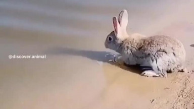 Have you ever seen a rabbit swim? 🐰💦